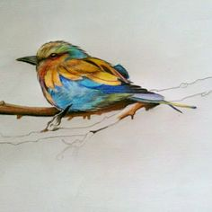Sopro de Cores: Pássaros