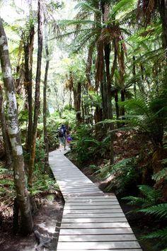 Thermalquellen Orakei Korako mit dem tollen Nature Walk