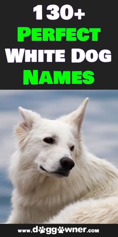 White dogs are absolutely stunning animals that deserve an equally stunning name to match. There is an array of white dog names below that have specifically picked out for dogs that have white fur. #whitedognames #dognames