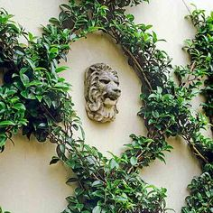 back wall idea - camellia branches create a leafy crisscross design in this espalier. Pyracantha, jasmine, and flowering quince other good options.