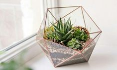 One way is to display the terrarium. The terrarium is a small garden in a glass container. Terrarium Diy, How To Make Terrariums, Glass Terrarium, Deco Nature, Nature Decor, Succulent Wall Planter, Succulent Plants, Cactus Y Suculentas, Air Plants