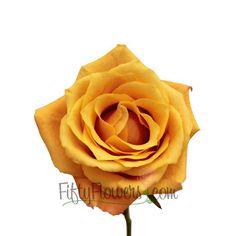 18d15af3362b 164 Best Standard Roses images in 2019