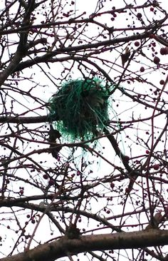 A crafty neighborhood bird used Easter basket grass to build its nest this year.