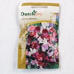 Delightful Gardening Dutch Pro Lathyrus Odoratus Sweetpod Old Spice Mixed 023131 - https://lostparcels.com/parcel-company-3/uncategorized/delightful-gardening-dutch-pro-lathyrus-odoratus-sweetpod-old-spice-mixed-023131/