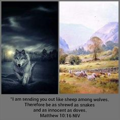 Sheep Among Wolves, Matthew 10, Daily Bible, Spiritual Quotes, Snakes, Gods Love, Bible Verses, Weapons, Wolf
