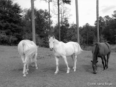 Learn more about equine photography services here:  http://photography.carlaroyal.com