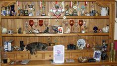 cat napping on shelf