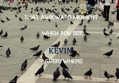 KEVINS EVERYWHERE! !!