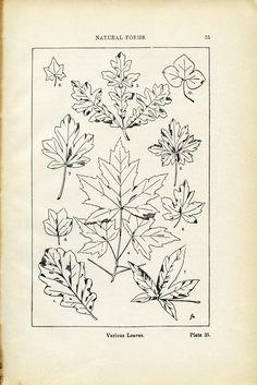 Various-Leaves-Book-Plate-OldDesignShop.jpg (1656×2479)