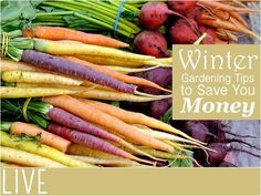 Winter Gardening Tips | Winter Gardening Tips to Save You Money