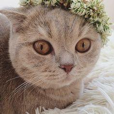 Αποτέλεσμα εικόνας για cats at summertime