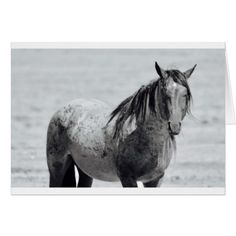 """Onaqui Mountain Wild Horse blank note card. 5""""x 7"""" Card - photography picture cyo special diy"""