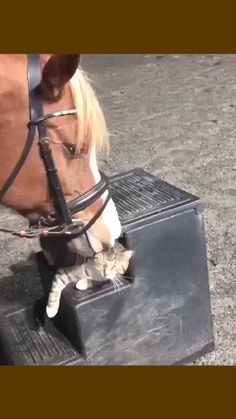 Cute Little Animals, Cute Funny Animals, Unlikely Friends, Fabulous Furs, Punk Outfits, Funny Vid, Four Legged, Fur Babies, Dog Cat
