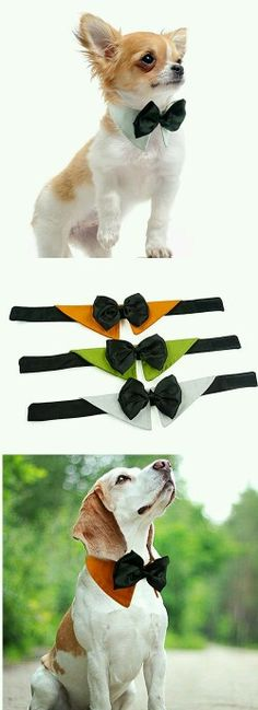 Dog collar with shirt collar & bow tie - so dashing!