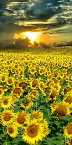 Good Morning Beautiful Images, Beautiful Photos Of Nature, Beautiful Gif, Beautiful Sunrise, Amazing Nature, Nature Gif, Nature Images, Nature Pictures, Beautiful Landscape Wallpaper