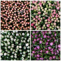 Pink white purple tulips on a flowermarket in Holland Buy Flowers, Growing Flowers, Fresh Flowers, Tulip Season, Purple Tulips, Flower Market, Holland, Pink White, Flower Arrangements