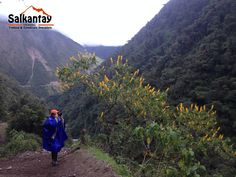 Salkantay Trekking, is a Reputable and Professional trekking company based in Cusco. We are the unique company who are 100% specialists just in Salkantay