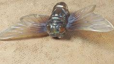 large french? , deco bakelite plastic cicada bug brooch