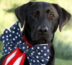 Keep your Pups Safe this 4th of July Holiday: http://www.dogchannel.com/dog-news/2009/07/03/how-to-keep-dogs-safe-during-fourth-of-july.aspx#