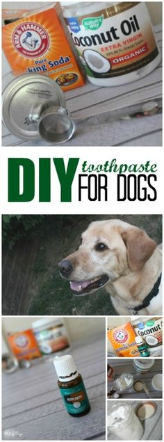 5 all natural diy grooming how tos for your pup pinterest dog diy toothpaste for dogs solutioingenieria Choice Image