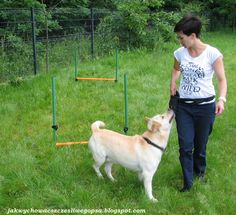 Jak wychować szczęśliwego psa: O szkoleniu