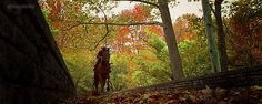 horse running | gif movie horse equine horses bay equestrian tb Tobey Maguire horse ...
