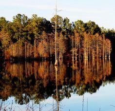 cedar creek rd cypress pond 5.psd by Sabre - Hope Mills, via Flickr