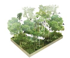 Skywalks-at-Exotic-Park