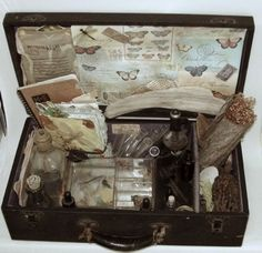 vintage naturalist's kit