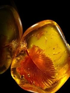 Baltis Amber Minerals And Gemstones, Rocks And Minerals, Amber Fossils, Prehistoric Animals, Beautiful Rocks, Rocks And Gems, Science And Nature, Stones And Crystals, Baltic Amber