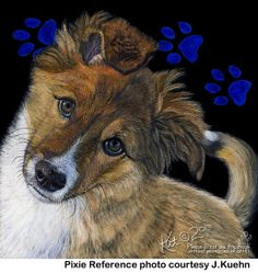 English Shepherd Puppy scratchart print -Pixie  **new and for sale...  True Imagery Studio on etsy!