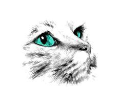 kitten poesje www.mim-pi.com kat