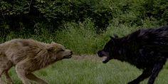 Werewolves from Bitten - Google Search