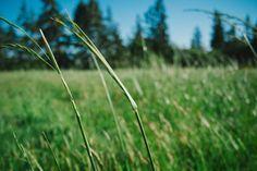 Green Field by Paul Jarvis Jquery Slider, Wordpress Slider, Mahatma Gandhi, Nature Images, Nature Photos, Travel Store, I Am Enough, Fotografia Macro, Psalm 23