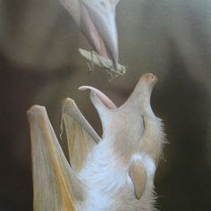 O Mon Dieu! A baby albino bat being fed by a bird. How amazing is this???