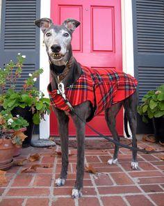 Greyhound Dog Coat & Jacket Red Blue Black by TheThimbleAndHound