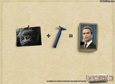 Get a laugh: Arnold Shaved