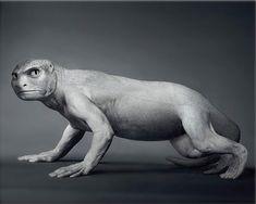 Interesting insight into Human Evolution - Sharenator - It's Human Nature To Share Human Base, Human Human, Macro And Micro, Human Evolution, Mythological Creatures, Atheist, Bored Panda, Prehistoric, Digital Image
