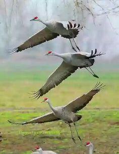 102 Best Birds Images Beautiful Birds Colourful Birds Exotic Birds