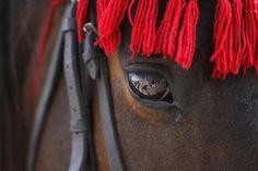 Festival de caballos.