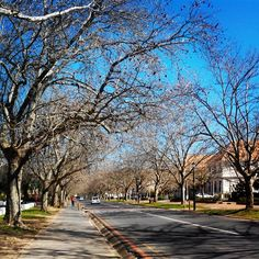 Winter. No leaves on trees in Victoria street, Stellenbosch (campus), Stellenbosch, Boland, South Africa. #myownphoto