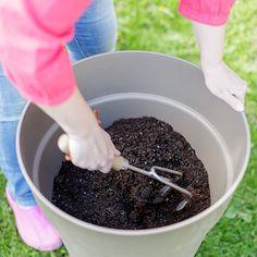 Fungi, Diy And Crafts, Flora, Garden, Garten, Mushrooms, Lawn And Garden, Plants, Gardens