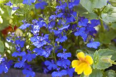 country cottage gardens - Google Search