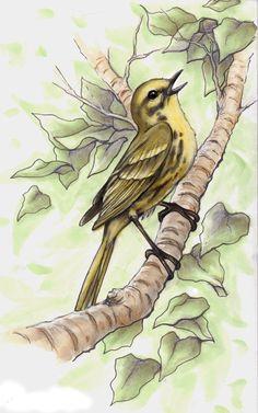 Prairie Warbler by vesuvia on DeviantArt