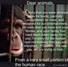 It was not God's plan when he created animals that we should cage, abuse, torture and use them for whatever other sick purposes we do with them. It was not his plan that we use them for entertainment, that we skin them alive - Asians skin animals alive so that rich women can wear their fur. If it doesn't make you feel physically ill to wear a dead animal's fur against your skin, then you are evil and should be skinned yourself. *~❤•❦•:*´`*:•❦•❤~*