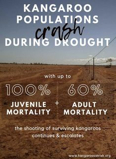 It's Time People Understand Its Not Just Farmers & Agribusiness Who Suffer During Drought.  #kangaroo #australia