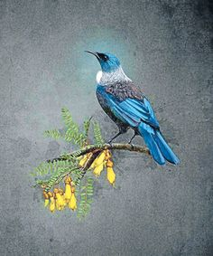 Tui Tui Bird, Maori Art, Kiwiana, Tattoo Drawings, Tattoos, Bird Design, Animal Paintings, Bird Art, Beautiful Birds