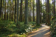 University of British Columbia Endowment Lands. A university surrounded by beautiful forests Vancouver Neighborhoods, University Of British Columbia, Beautiful Forest, West End, Geography, Places Ive Been, The Neighbourhood, Country Roads, Forests