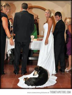 """""""I just wanted to be part of the wedding."""" - Dog on train"""