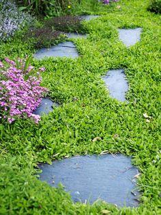 Trampstenar och marktäckare. Stora ytor med bara gräs kan bli tråkiga. I villaträdgårdar finns ofta mindre ytor på sidorna av husen som är svåra att planera. Här är det perfekt att göra en passage med trampstenar som omgärdas av ett grönt spännande täcke, till exempel i sällskap av blommande timjan. Krypkotula, Leptinella squalida, trivs i sol och halvskugga och är en snabbväxande marktäckande växt som tål att trampas på.